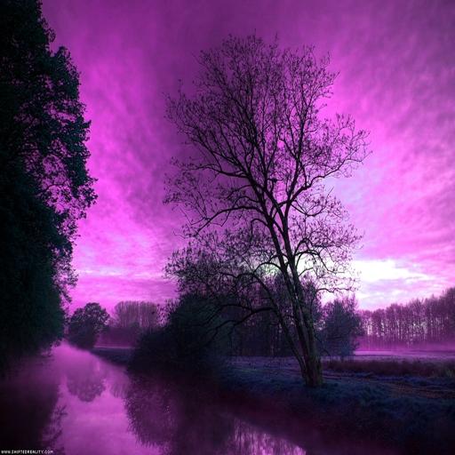 3D紫樹 休閒 App LOGO-APP試玩