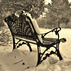 Antique Weathered Bench by Jeff Evans - Novices Only Objects & Still Life ( winter, black and white, still life, snow, weather, trees, pond, antique bench )