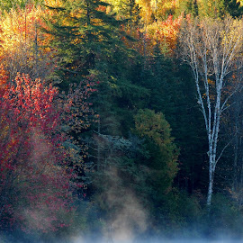 Fly fishing the Androscoggin River by Linda Labbe - Landscapes Travel ( water, morning mist, fall foliage, fishing, people, river )
