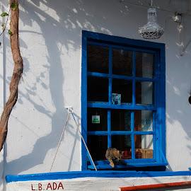 by Selahattin Doğancıl - Animals - Cats Playing ( cat, window, blue, lampshade, boat )