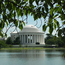Jefferson Memorial by Ray Stevens - Buildings & Architecture Statues & Monuments
