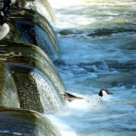 by Ivka Njegac - Nature Up Close Water