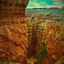 Bryce canyon by Gredal Winegar - Landscapes Caves & Formations ( red, utah, bryce, canyon, trip )