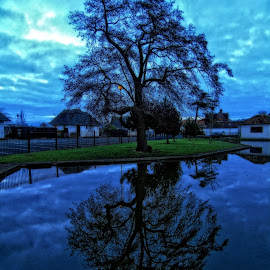 blue reflections by Chrissy Woodhouse - City,  Street & Park  City Parks ( winter, reflections, mirror image, blue.cool,  )