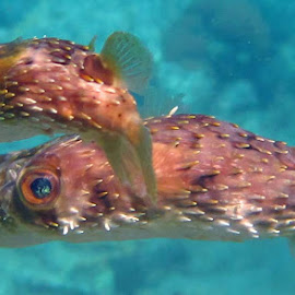by Francky Audouard - Animals Fish (  )