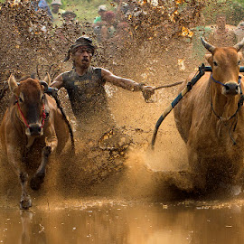 Cow Race by Zairi Waldani - Sports & Fitness Rodeo/Bull Riding
