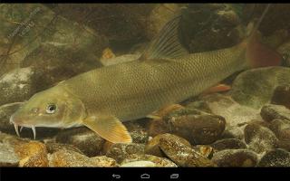 Screenshot of Fische OÖ - Schonbestimmungen