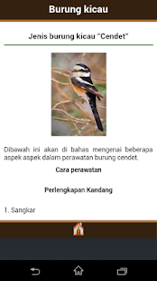 Jenis Burung Kicau - screenshot