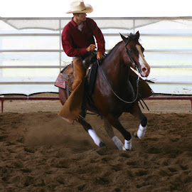 Riding High by Michelle Blaydes Donovan - Sports & Fitness Rodeo/Bull Riding