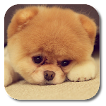 Q Puppy Live Wallpaper 1.2 Apk