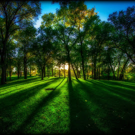 It's easy being green by Paul Stadnyk - Landscapes Forests ( field, park, green, trees, forest )