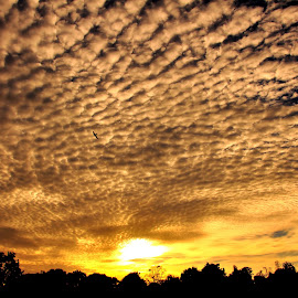 The Beauty Above by Ray Rosal - Landscapes Cloud Formations ( bird, clouds, sky, fly, silhouette, sunset, golden, formation )