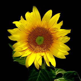 yellow beauty by Jason Day - Flowers Flowers in the Wild
