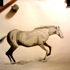 Horse by Viktória Nagy - Drawing All Drawing