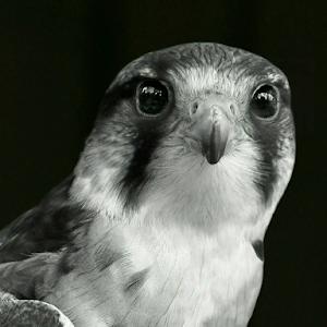 Hawk 1014 3.jpg