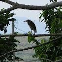 Garza - Heron