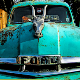 by Keith Sutherland - Transportation Other ( old, vintage, truck, green, cow, ford, hood )