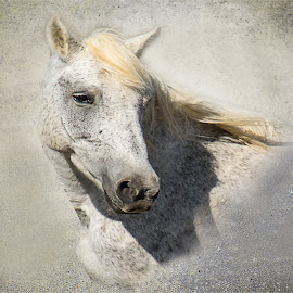 Wild Horse by Marleen la Grange - Animals Horses