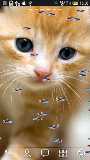 ネオンテトラと子猫★LIVE壁紙