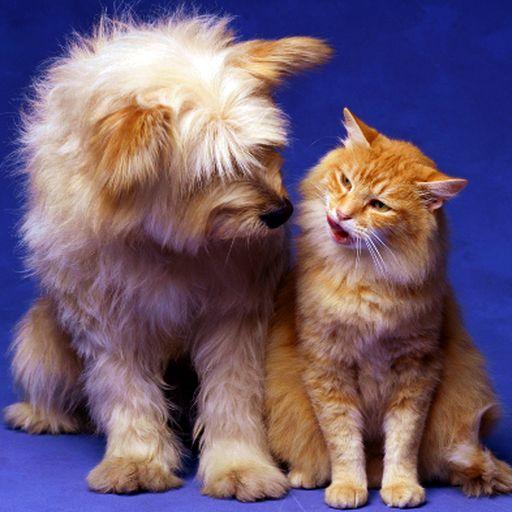 ANIMAL.CONVERSATIONS LOGO-APP點子