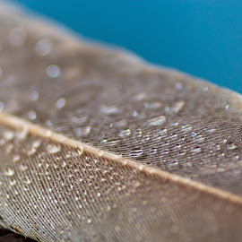WATER DROPS by Azad Nechikkade - Abstract Macro ( water drops, macro, feather )