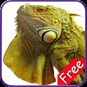 Iguana+ Free icon