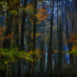Memento mori by Mihail Dulu - Landscapes Forests ( autumn, blue, trees, forest, october, light,  )