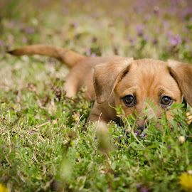 Sunning by Aimee Hunt - Animals - Dogs Playing ( adoption, puppy, dog, photo, portrait,  )