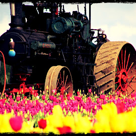 Tulip Tractor by Brandie Asay - Transportation Other