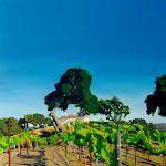 Baehner Fournier Vineyards - 1