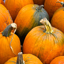 Pumpkin Anyone? by Dale Kemp - Nature Up Close Gardens & Produce (  )