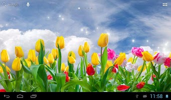 Screenshot of Sunny tulips