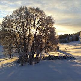 by Jose Figueiredo - Landscapes Prairies, Meadows & Fields ( snow, fields, norway )