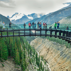 Sky Walk by Joseph Law - Buildings & Architecture Bridges & Suspended Structures ( national park, glasses, suspended bridge, sky walk, rocky mountains, trees, iron structures, tourism, jasper )