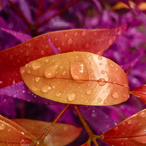 after rain by Michelle Meenawong - Artistic Objects Other Objects