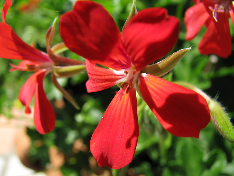 Photos en macro - Fleurs