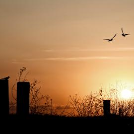 Untitled by Dedi Ndoen - Landscapes Sunsets & Sunrises