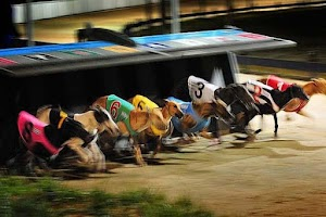 Screenshot of Dogs Racing