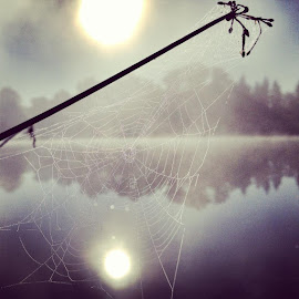dew by Brittany Todd - Instagram & Mobile iPhone ( park, fog, dew, web, sunrise, morning, pond, mist )