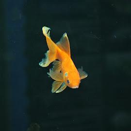 Lighten Up.. by Saurabh Biswas - Animals Fish ( puri, katihar, fish, india, saurabhbiswas )