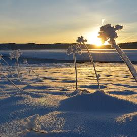A morning sunrise by Denton Thaves - Landscapes Sunsets & Sunrises ( sunrise )