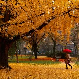Beautiful Ginko tree in down town Zagreb park by Tomislav Marunica - City,  Street & Park  City Parks ( park, ginko, parks, ginko tree, croatia, zagreb, landscape )