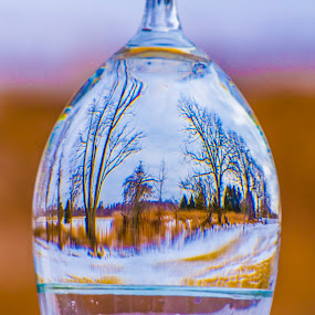 nature through the glass.. by Rajeev Krishnan - Artistic Objects Still Life ( tree, nature, glass, nature up close, artistic objects,  )