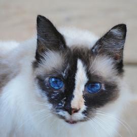 Moochi by Shannon Parsons  - Animals - Cats Portraits ( cat, moochi, feline )