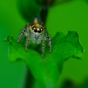 by Saurabh Gaikwad - Animals Insects & Spiders (  )