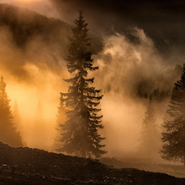 Mist on the mountains by Ioan Ciobotaru - Landscapes Forests ( mountains, three, forest, sunrise, landscape, mist )