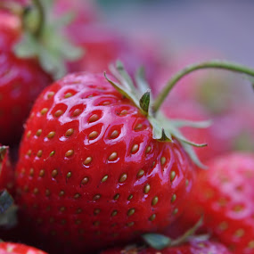 Strawberry delight by Ruth Holt - Food & Drink Fruits & Vegetables ( fruit, red, wimbledon, summer, pick your own, strawberry,  )