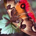 La Mariposa de cuatro ojos