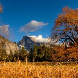Yosemite Vista by Madhujith Venkatakrishna - Landscapes Travel