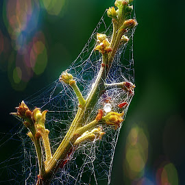 Shroud. by Dave  Horne - Nature Up Close Webs